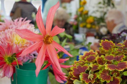 RGHC flowers 5 WEB 2-9-17