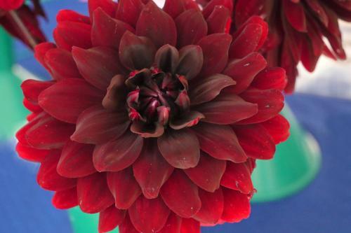 RGHC flowers 7 WEB 2-9-17