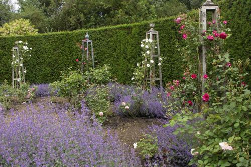 rose garden WEB