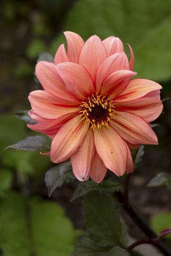 flower WEB